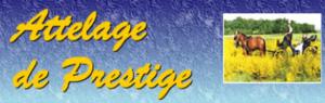 Attelage de Prestige à Cernay